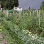 Gemüsevielfalt auf kleinem Raum
