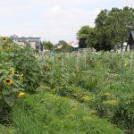 Die Bio Forschung Austria (Besucherzentrum im Hintergrund) unterstützt Ökoparzellisten
