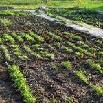 Mischkultur im Garten der Vielfalt