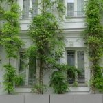 facade greenings improve the he microclimate around buildings © Fricke