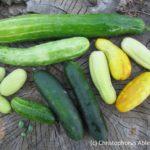 Gurkenvielfalt aus dem Garten der Vielfalt